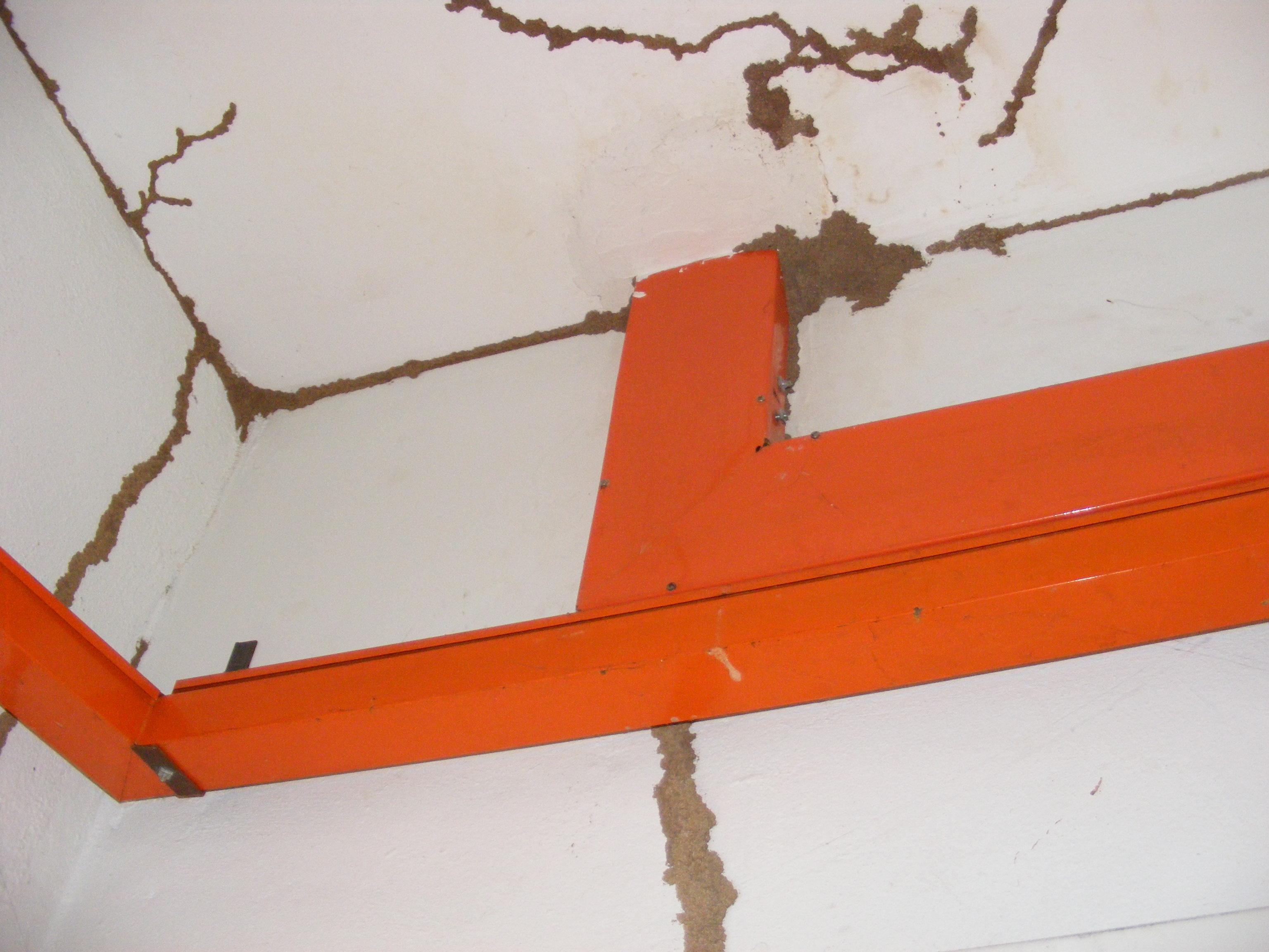 ALNASS Pest Control & Hygiene - Termite Mud Tubes